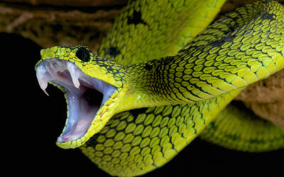 What You Need to Know about Snakebites and Treatment in the Wilderness