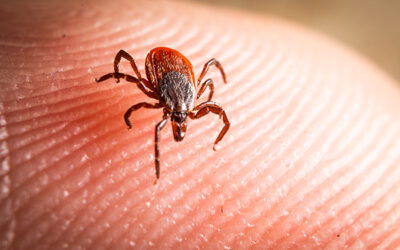 Do's and Don'ts of Tick Time