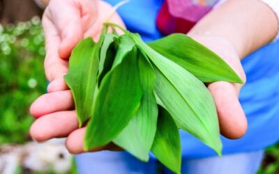 May Flowers: Tips for Foraging Wild Edible Plants